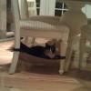 Cat Crib Lily Mae