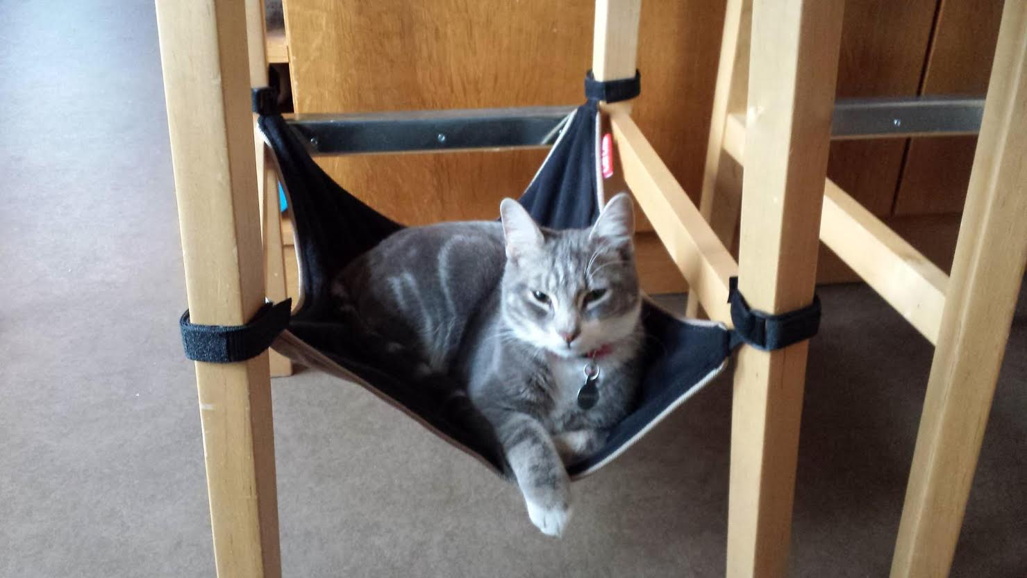 cat hammock catcrib    u2014 cat crib   space saving cat hammock underneath your      rh   catcrib